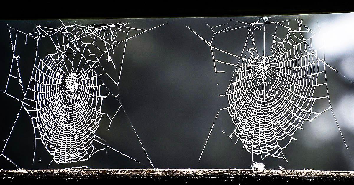 Rezultat iskanja slik za pajčevina